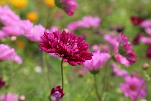 Seasonal Allergy Recommendations